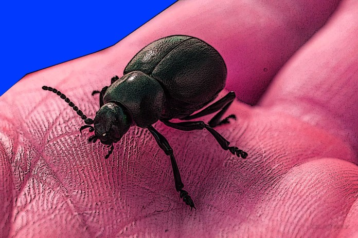 3 Shocking Facts About Bedbugs and NYC Hotels Clapway