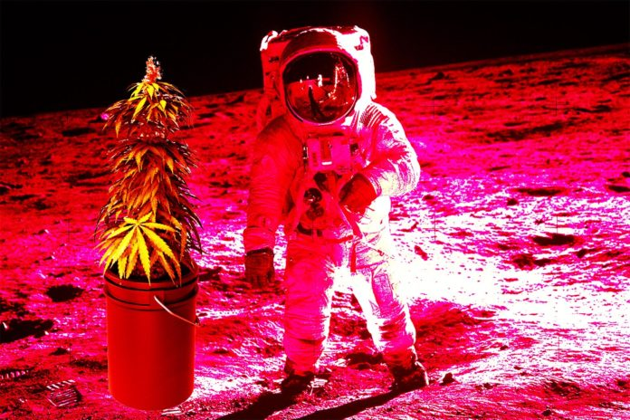 NASA Astronauts Growing Medical Marijuana on Mars NASA Astronauts will Grow Medical Marijuana on Mars Clapway